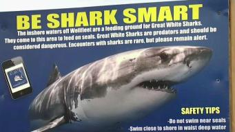 Coexisting With Sharks After a Deadly Attacck