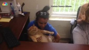 Overweight Cat Finds Forever Home