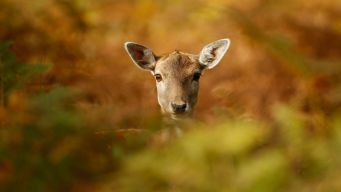 Final Deer Days of Year for Maine Archers, Muzzleloaders