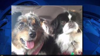 Dog Saves NH Family From Burning House