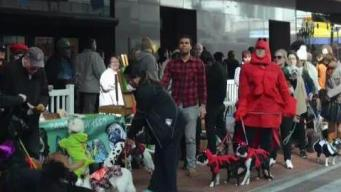 Doggie Halloween Costume Competition in Downtown Boston