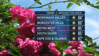 Pick of the Weekend: Beautiful, Sunny Sunday