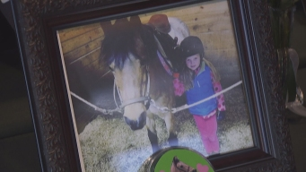 'Our Hearts Are Broken': 24 Horses Die in Conn. Barn Fire
