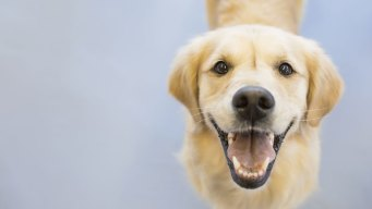 Curbing Rising Pet Costs