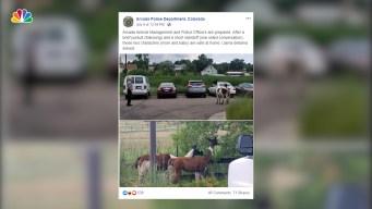 Colorado Police Have Standoff With Runaway Llamas, Joke on Social Media