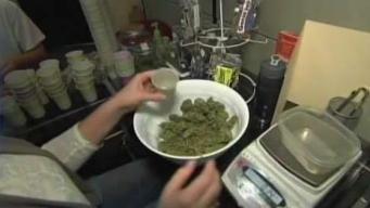 Marijuana Growers Threaten to Sue Cannabis Commission