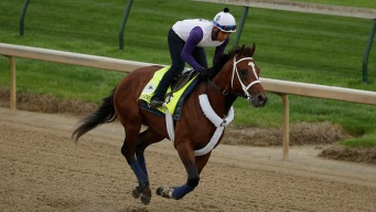 Maximum Security Goes From Running for Minimum to Derby