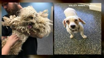 'Pounds Of Fur' Removed From Neglected Pup