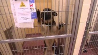 Dogs Seized in NH Animal Cruelty Case to Be Up for Adoption