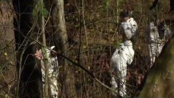 Woods to Be Searched Again in Connection With 1980 Cold Case
