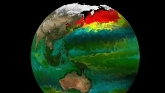 Predicting Change in the Oceans' Color