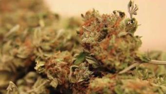 Dozens in Vermont Request Marijuana Records to Be Erased