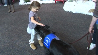 Therapy Dogs Making Visits to Bradley International Airport