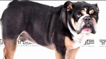 No Further Charges Filed in Death of Jerod Mayo's Bulldog