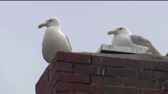 Wallet Swiped by Seagull Returned to Owner