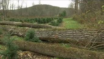 Vt. Agriculture Sector Rebounding From Damaging Wind Storm