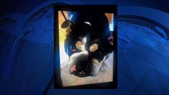 Former Pats Player Seeks Closure in Case of Missing Dog