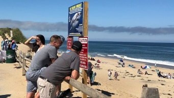 Tornadoes, Taxes and Sharks: Cape Cod's Had a Tough Summer