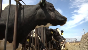 Rhode Island Names Its State Dairy Farm of the Year