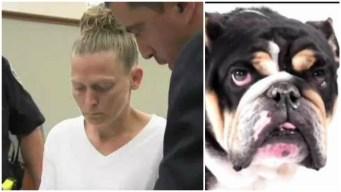 Trainer Reveals New Details About Death of Ex-Patriot's Dog
