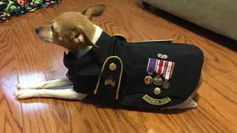 Veteran Supports Peers by Creating Service Dog Vests