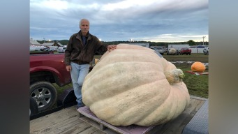 NH Pumpkin Deemed Heaviest in North America