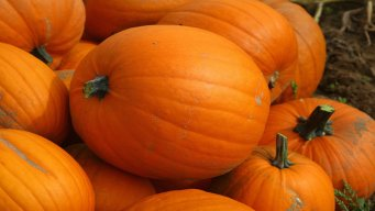 Money Saving Mondays: Reusing Pumpkins