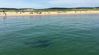 Shark Siren? Fewer Seals? Public Talks Beachgoer Safety on Cape Cod