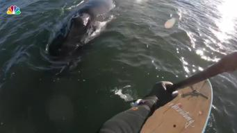 Man's Close Encounter With Giant Humpback Whale in NJ