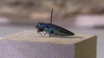 RI: About 13 Percent of Forest Trees Dead Due to Insects