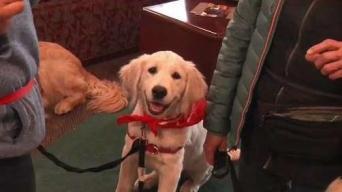 Spotlight on Service Dog Training
