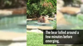California Bear Relaxes in Hot Tub, Laps Up Margarita