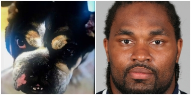Ex-Pats Player's Missing Dog Found Dead; Trainer Arrested