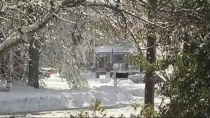 Second Canton Victim Killed by Falling Tree Limb