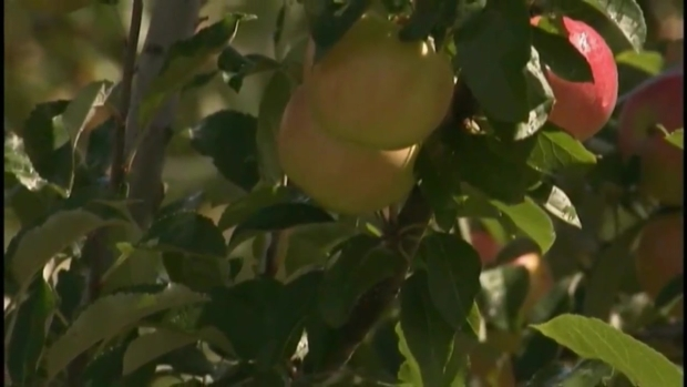 [NECN] How is the Drought Impacting Crops, Foliage?