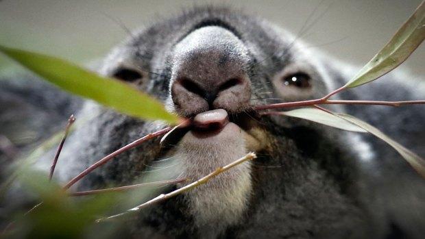 Stunning Animal Photos From Around the World