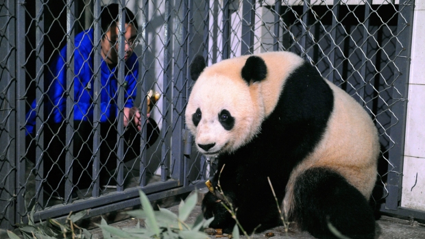 [NATL] Now in China, Bao Bao Starts Quarantine