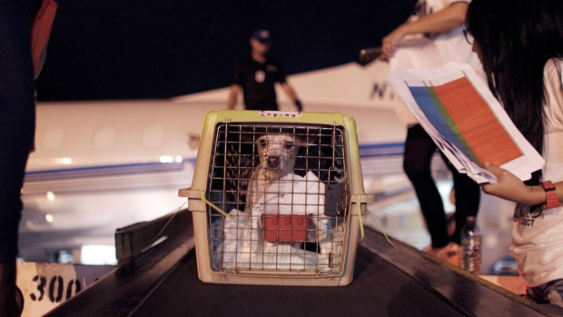 200 Doomed Dogs Saved by Airlift to US
