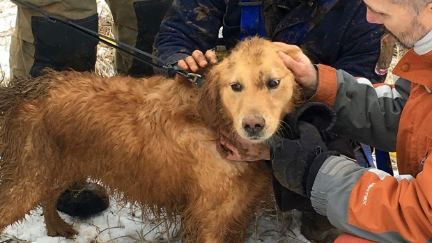Firefighters Rescue Dog Stuck in Sinkhole for 2 Days