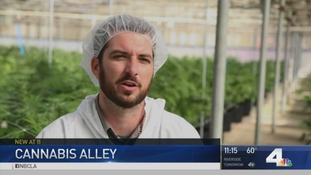 Cannabis Panel Backs Pot Sales at Variety of Businesses — Boston