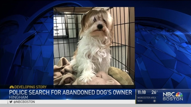 [NECN] Police Search for Abandoned Dog's Owner