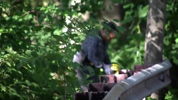 [NECN] Police Investigating Apparent Home Invasion in Boston's Hyde Park Neighborhood