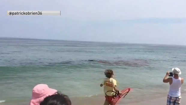 Chaos erupts on beach as shark attacks seal close to shore