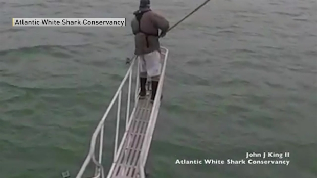 [NECN] Shark Comes Too Close to Researchers in Wellfleet