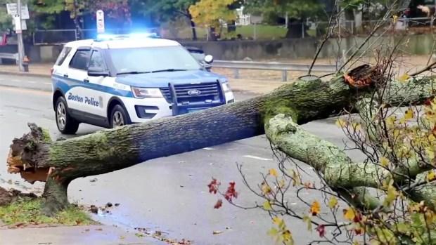 [NECN] Winds Knock Down Tree in Boston