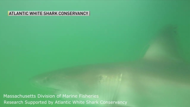 [NECN] GoPro Video Shows Close-Up Footage of Shark off Cape Cod