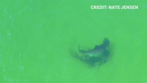 Shark Sightings Temporarily Close Cape Cod Beaches - NECN