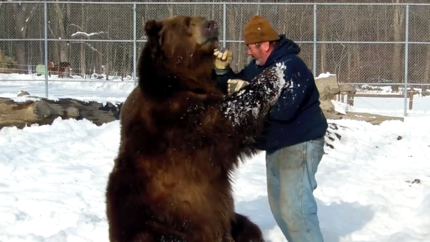 Watch This 1500 Pound Bear Pal Around With Human Friend