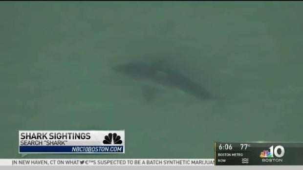 [NECN] Cape Cod Shark Attack Victim Expected to Be OK