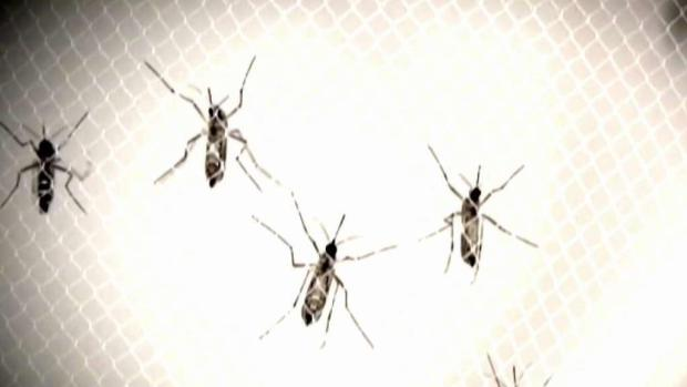 [NECN] Concerns After 9th Human Case of EEE Confirmed in Mass.